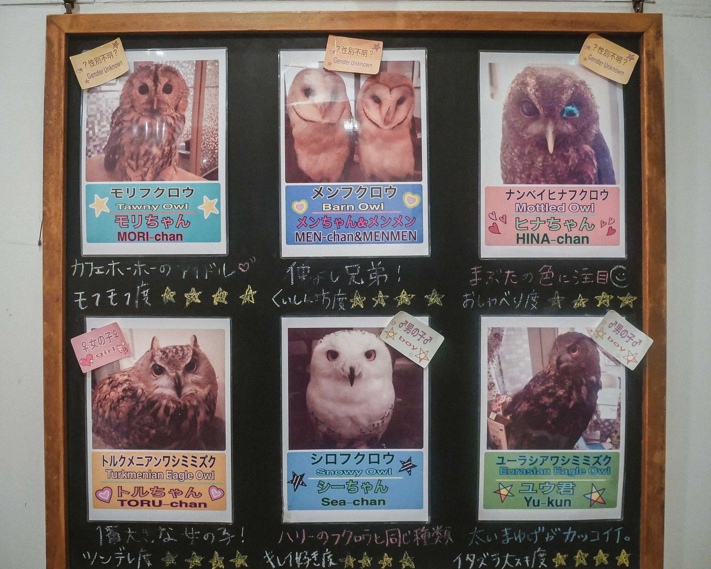 Infoboard for the owls within the cafe